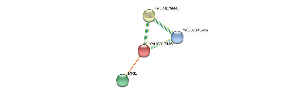 XP_502940.1 protein (Yarrowia lipolytica) - STRING interaction network