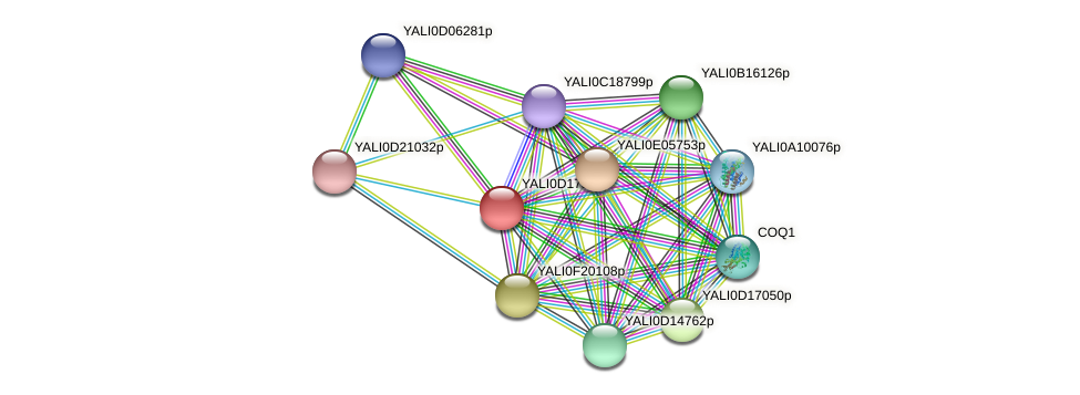 XP_502945.1 protein (Yarrowia lipolytica) - STRING interaction network