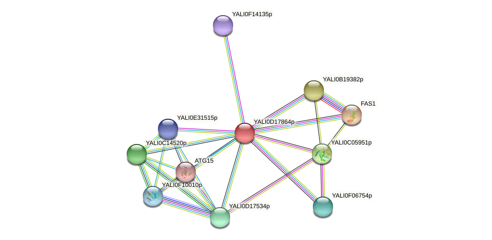 XP_502959.1 protein (Yarrowia lipolytica) - STRING interaction network