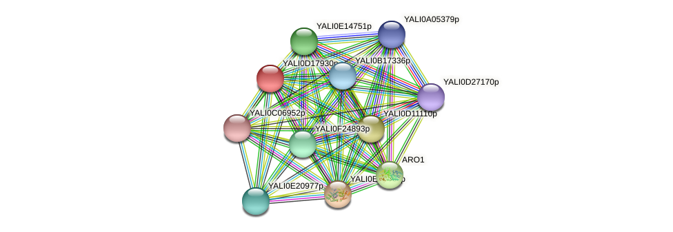 XP_502961.1 protein (Yarrowia lipolytica) - STRING interaction network