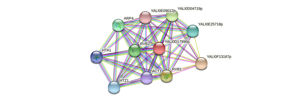 XP_502965.1 protein (Yarrowia lipolytica) - STRING interaction network