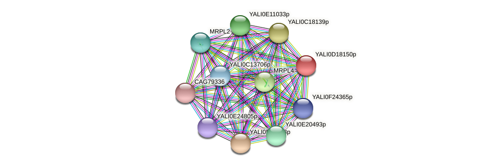 XP_502972.1 protein (Yarrowia lipolytica) - STRING interaction network