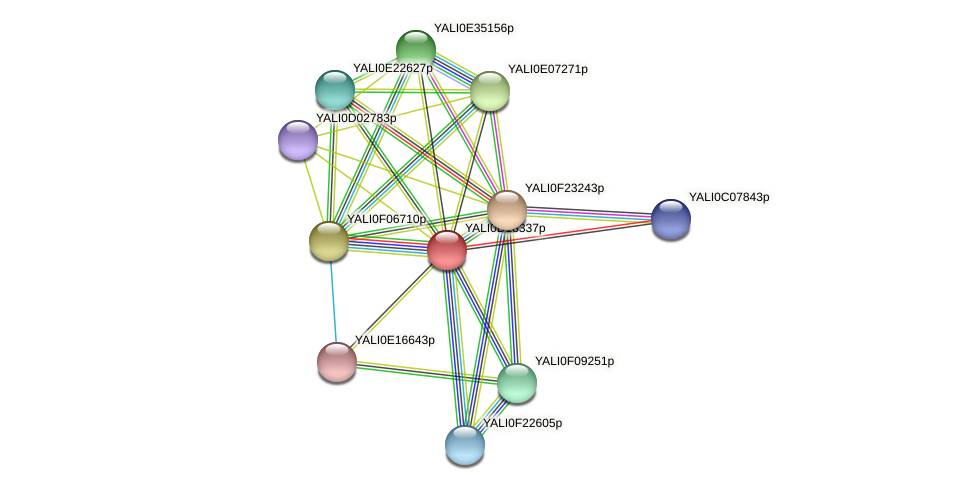 XP_502981.1 protein (Yarrowia lipolytica) - STRING interaction network