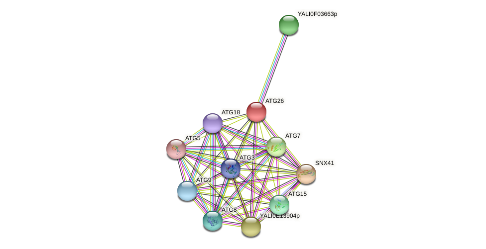 ATG26 protein (Yarrowia lipolytica) - STRING interaction network
