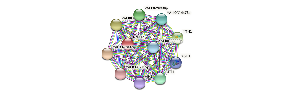 RNA14 protein (Yarrowia lipolytica) - STRING interaction network