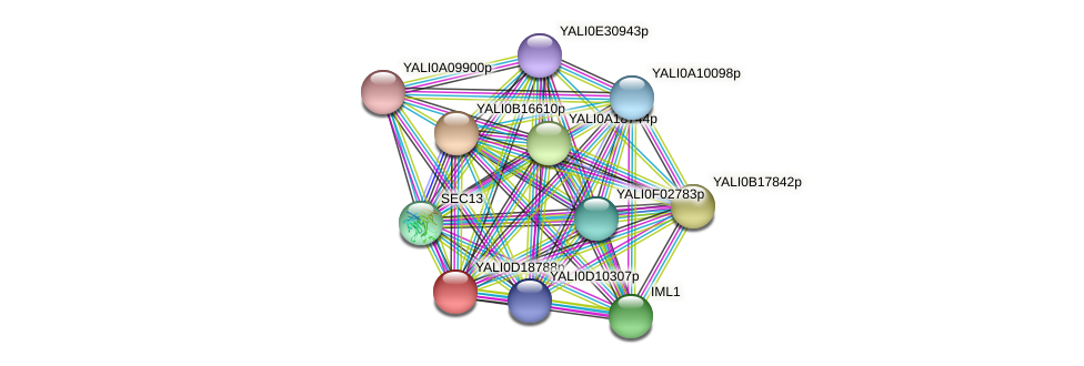 XP_503002.1 protein (Yarrowia lipolytica) - STRING interaction network