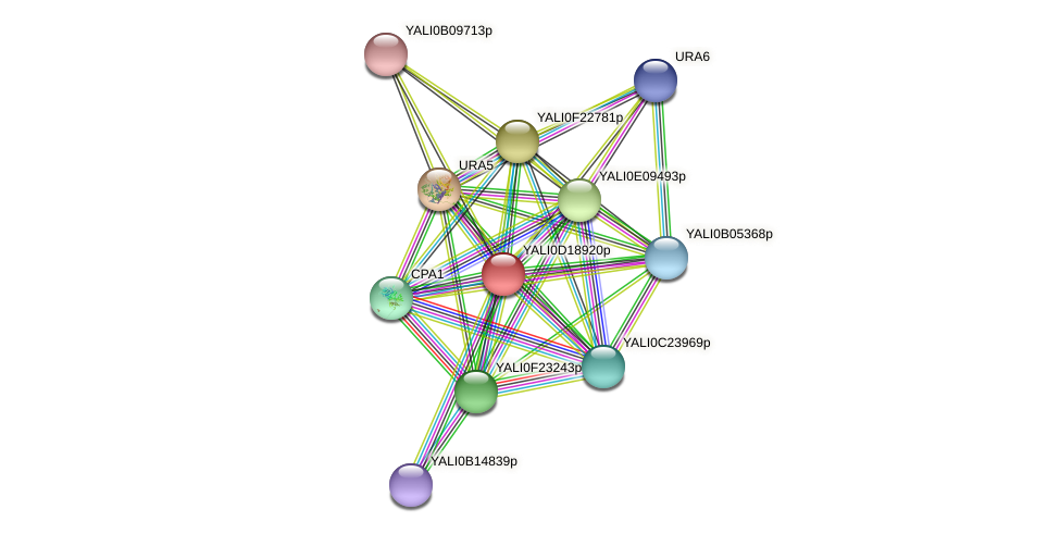 XP_503008.1 protein (Yarrowia lipolytica) - STRING interaction network