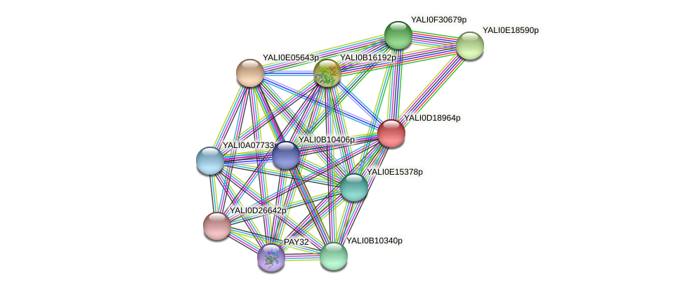 XP_503010.1 protein (Yarrowia lipolytica) - STRING interaction network