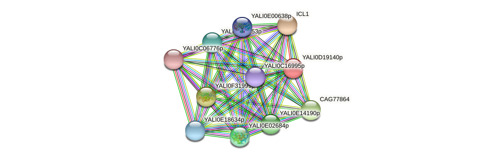 XP_503018.1 protein (Yarrowia lipolytica) - STRING interaction network