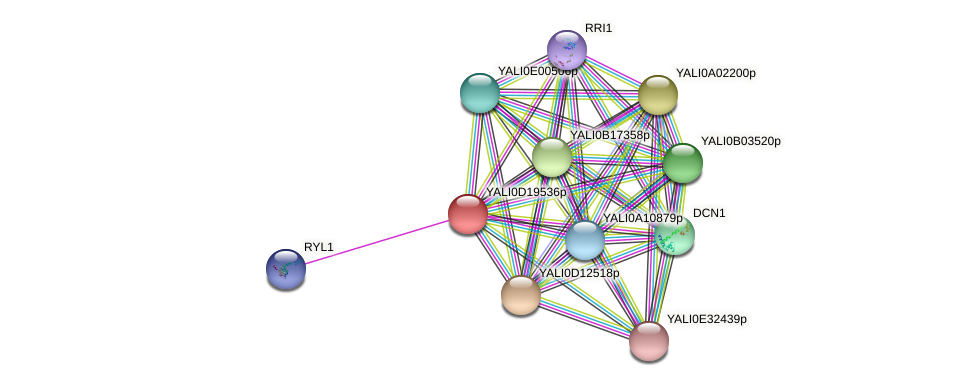XP_503036.1 protein (Yarrowia lipolytica) - STRING interaction network