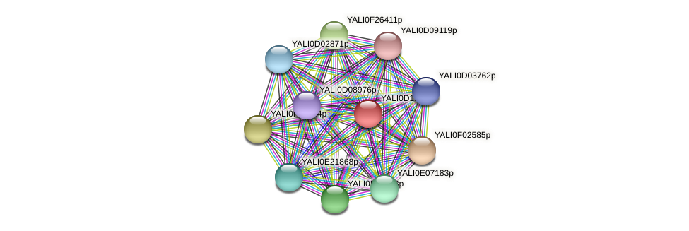 XP_503049.1 protein (Yarrowia lipolytica) - STRING interaction network