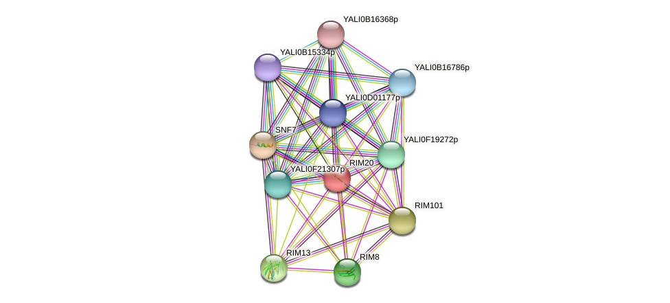 RIM20 protein (Yarrowia lipolytica) - STRING interaction network