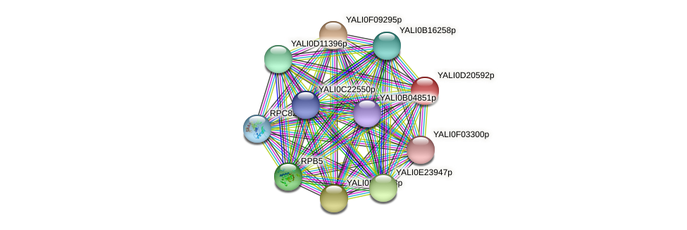XP_503079.1 protein (Yarrowia lipolytica) - STRING interaction network