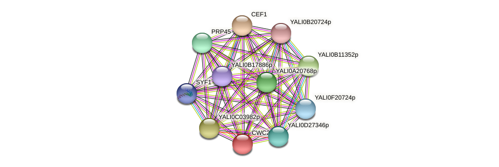 CWC22 protein (Yarrowia lipolytica) - STRING interaction network