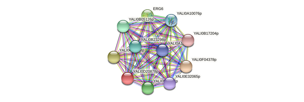 XP_503090.1 protein (Yarrowia lipolytica) - STRING interaction network
