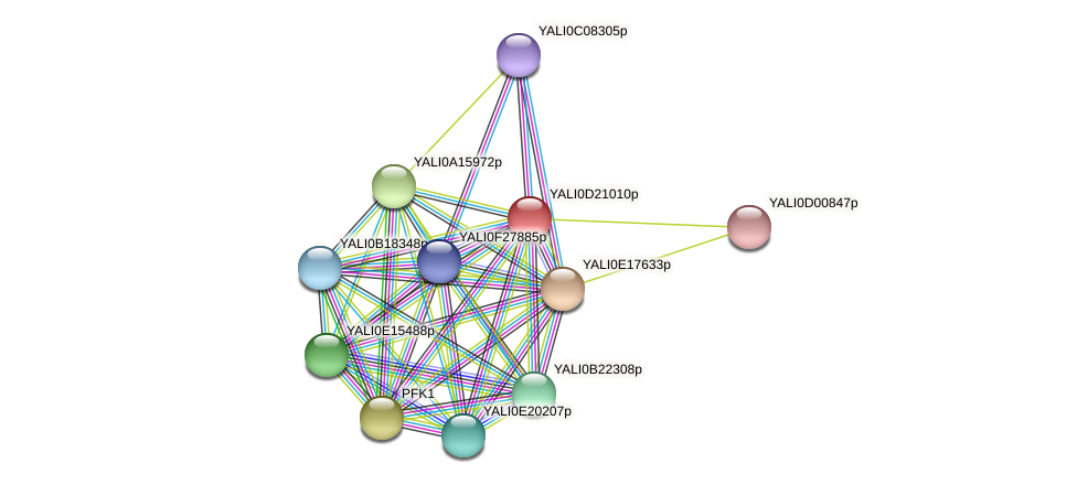 XP_503096.1 protein (Yarrowia lipolytica) - STRING interaction network