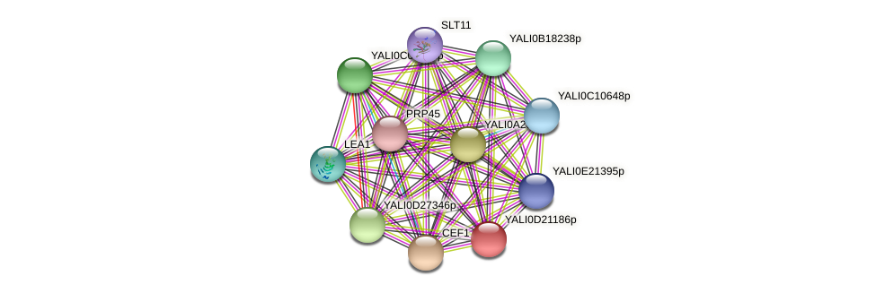 XP_503103.1 protein (Yarrowia lipolytica) - STRING interaction network