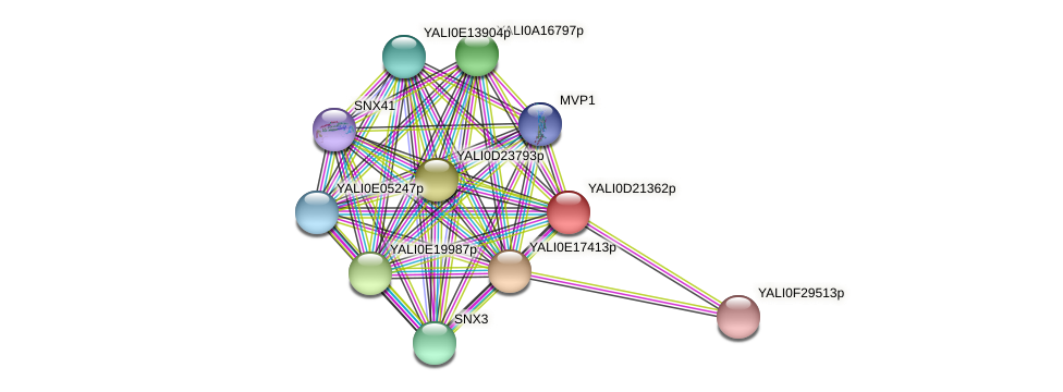 XP_503108.1 protein (Yarrowia lipolytica) - STRING interaction network