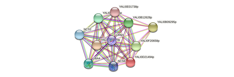 XP_503114.1 protein (Yarrowia lipolytica) - STRING interaction network