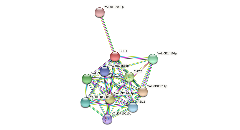 XP_503119.1 protein (Yarrowia lipolytica) - STRING interaction network