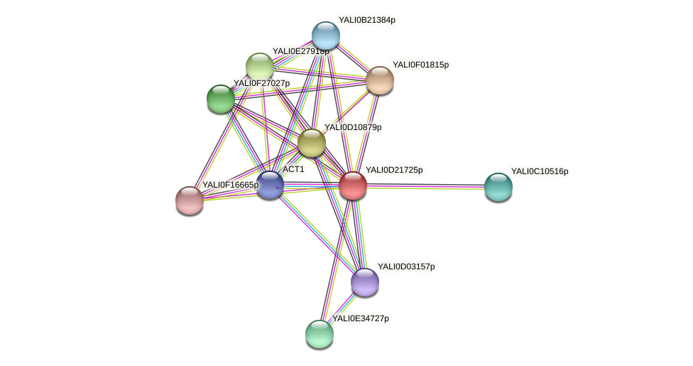 XP_503123.1 protein (Yarrowia lipolytica) - STRING interaction network