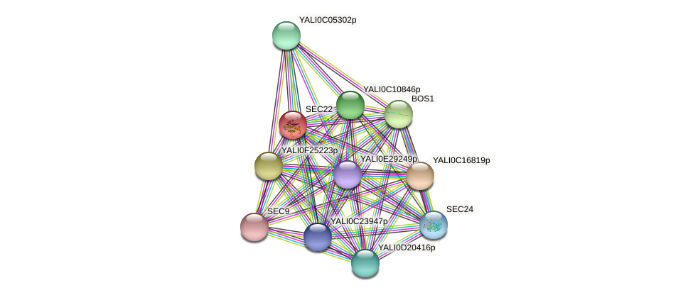 SEC22 protein (Yarrowia lipolytica) - STRING interaction network