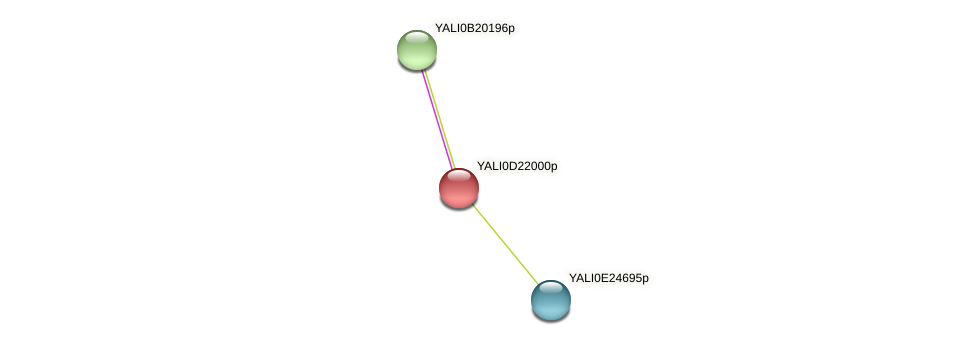 XP_503134.1 protein (Yarrowia lipolytica) - STRING interaction network