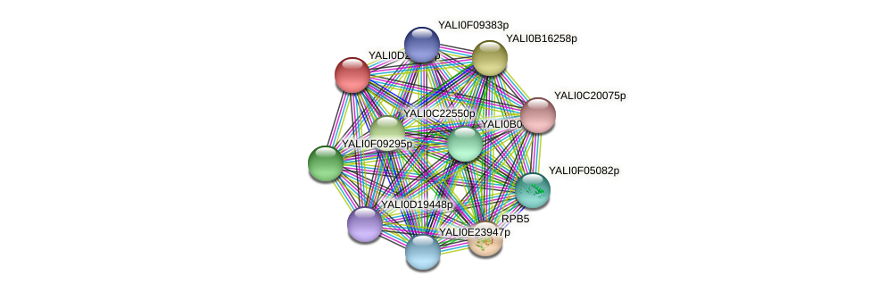 XP_503146.1 protein (Yarrowia lipolytica) - STRING interaction network