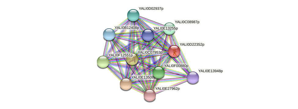 XP_503148.1 protein (Yarrowia lipolytica) - STRING interaction network