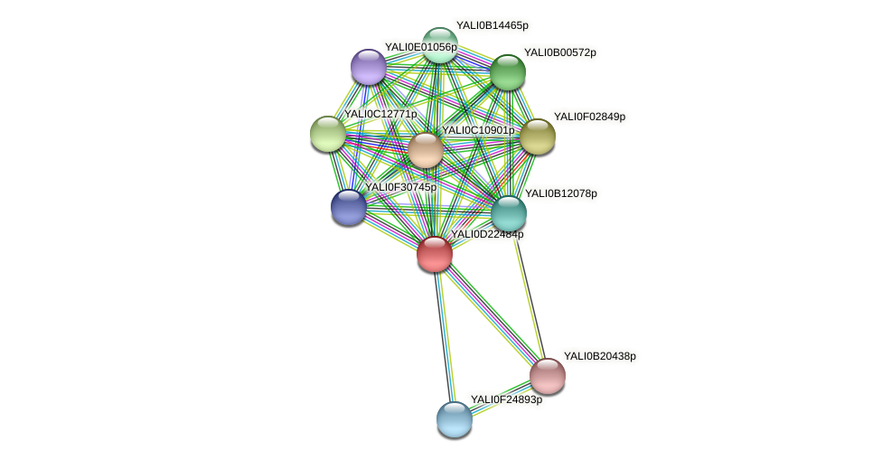 XP_503153.1 protein (Yarrowia lipolytica) - STRING interaction network