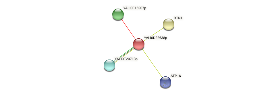 XP_503160.1 protein (Yarrowia lipolytica) - STRING interaction network