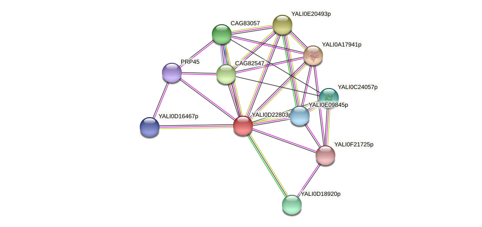 XP_503164.1 protein (Yarrowia lipolytica) - STRING interaction network