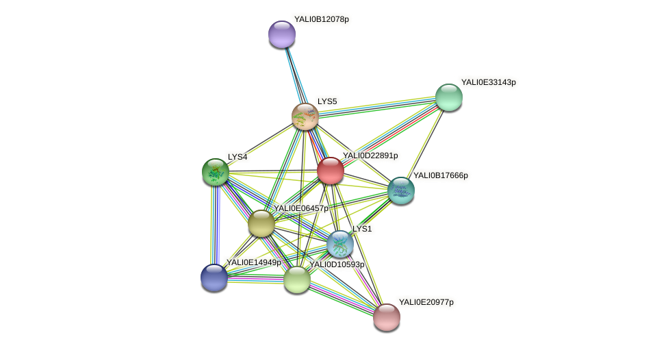 XP_503168.1 protein (Yarrowia lipolytica) - STRING interaction network