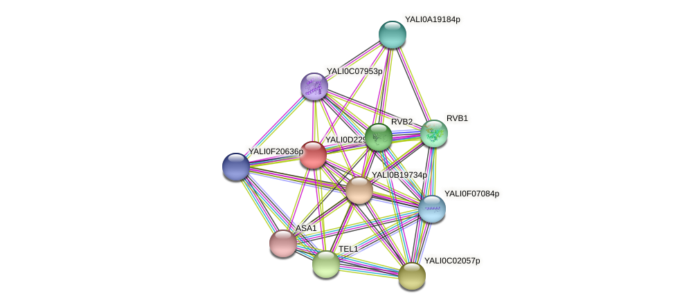 XP_503172.1 protein (Yarrowia lipolytica) - STRING interaction network