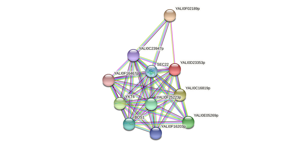 XP_503187.1 protein (Yarrowia lipolytica) - STRING interaction network