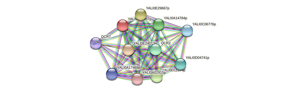 XP_503189.1 protein (Yarrowia lipolytica) - STRING interaction network