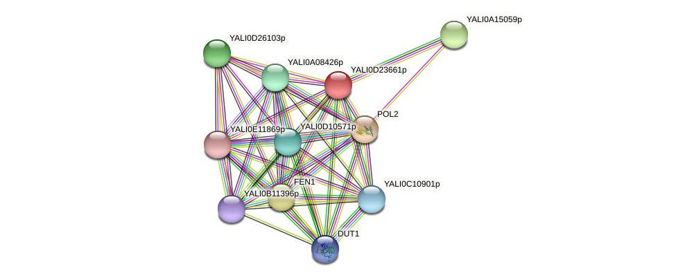XP_503199.1 protein (Yarrowia lipolytica) - STRING interaction network