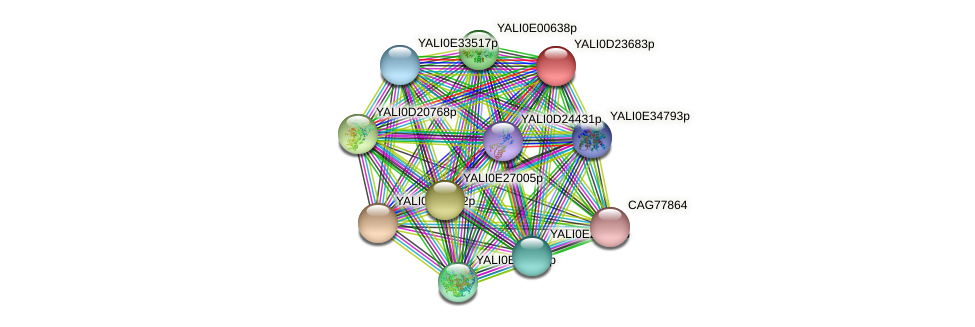 XP_503200.1 protein (Yarrowia lipolytica) - STRING interaction network