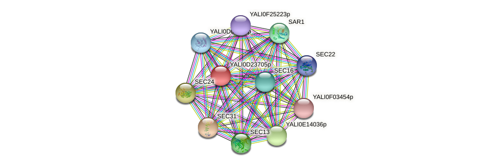 XP_503201.1 protein (Yarrowia lipolytica) - STRING interaction network