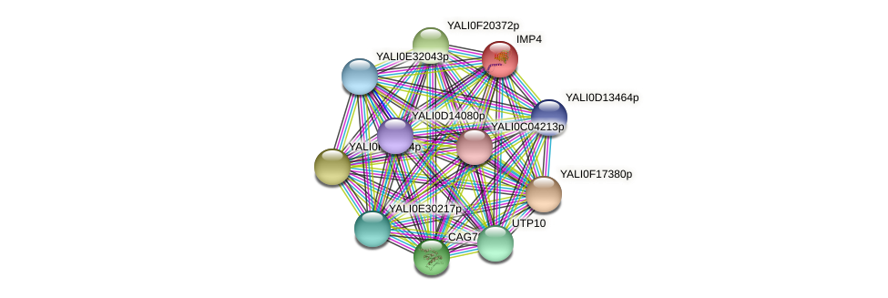 IMP4 protein (Yarrowia lipolytica) - STRING interaction network
