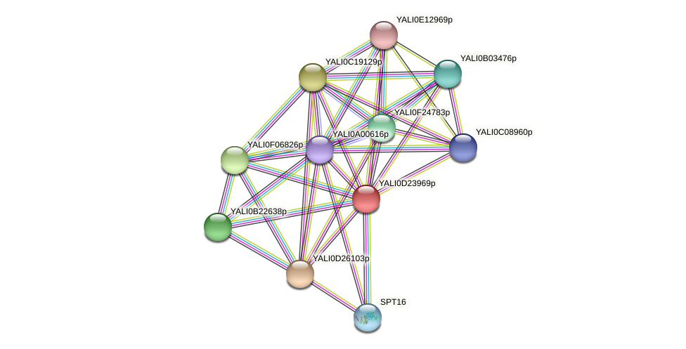 XP_503213.1 protein (Yarrowia lipolytica) - STRING interaction network