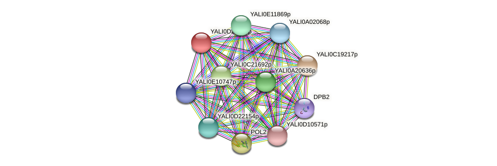 XP_503218.1 protein (Yarrowia lipolytica) - STRING interaction network