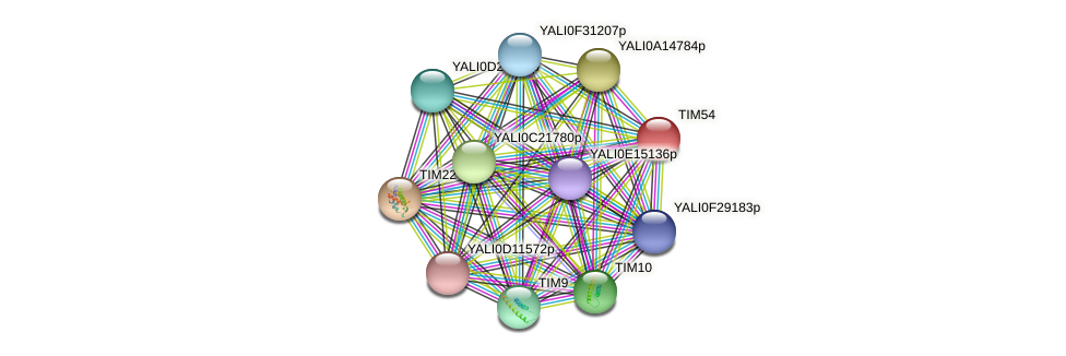 TIM54 protein (Yarrowia lipolytica) - STRING interaction network