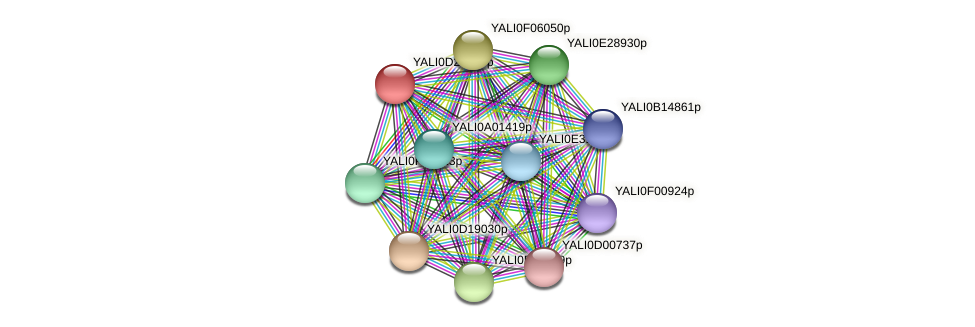 XP_503240.2 protein (Yarrowia lipolytica) - STRING interaction network