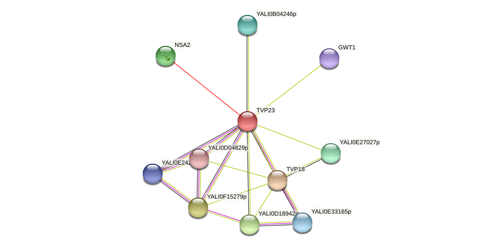 TVP23 protein (Yarrowia lipolytica) - STRING interaction network