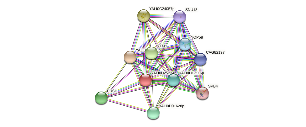 XP_503266.1 protein (Yarrowia lipolytica) - STRING interaction network