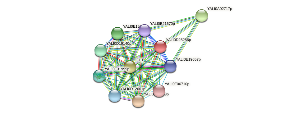 XP_503267.1 protein (Yarrowia lipolytica) - STRING interaction network