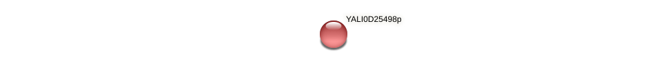 XP_503276.1 protein (Yarrowia lipolytica) - STRING interaction network