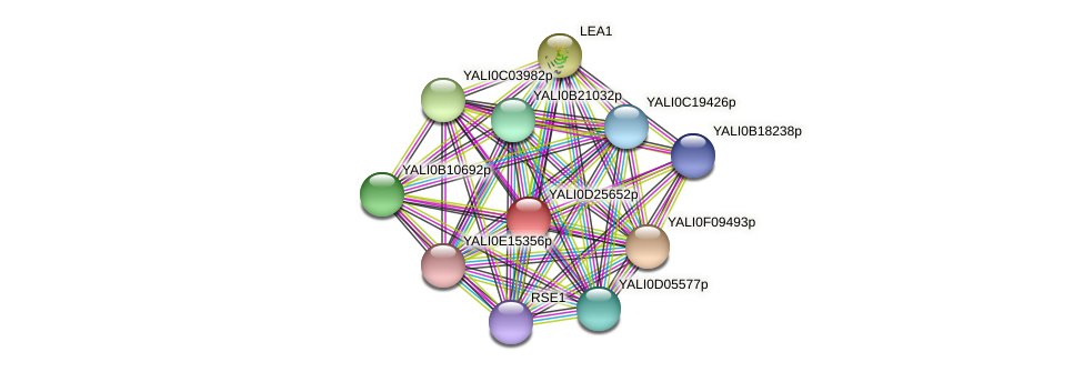 XP_503283.1 protein (Yarrowia lipolytica) - STRING interaction network