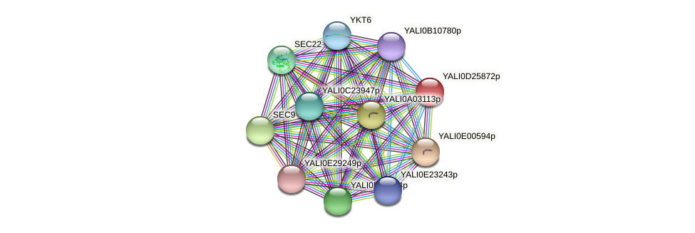 XP_503293.1 protein (Yarrowia lipolytica) - STRING interaction network